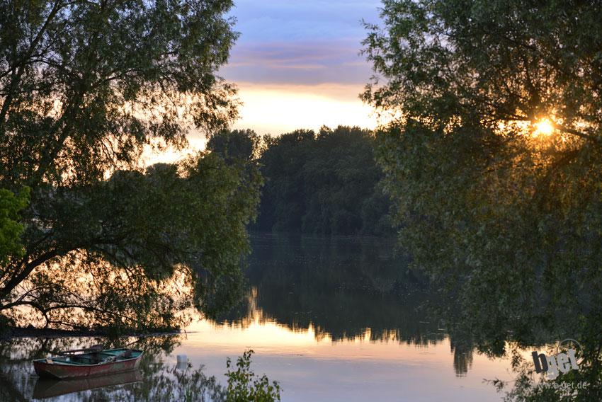 Rhein bei Ketsch