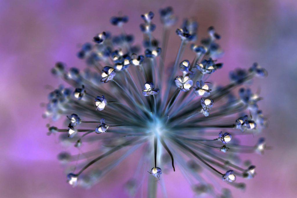 Blüttenkelche